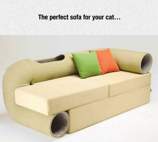 the perfect sofa for your cat