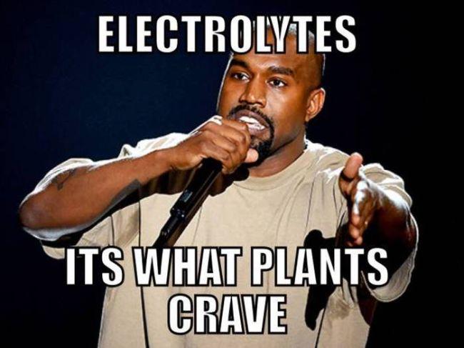 kanye says electrolytes it's what plants crave