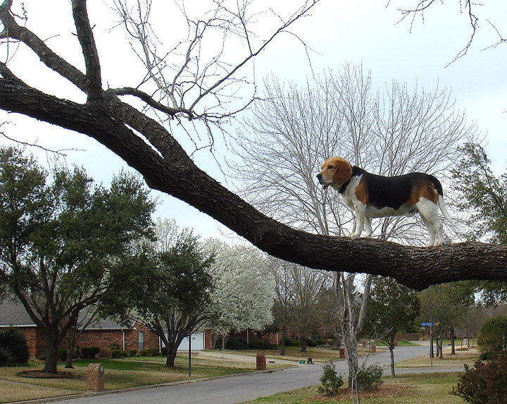dog on the look out in a tree