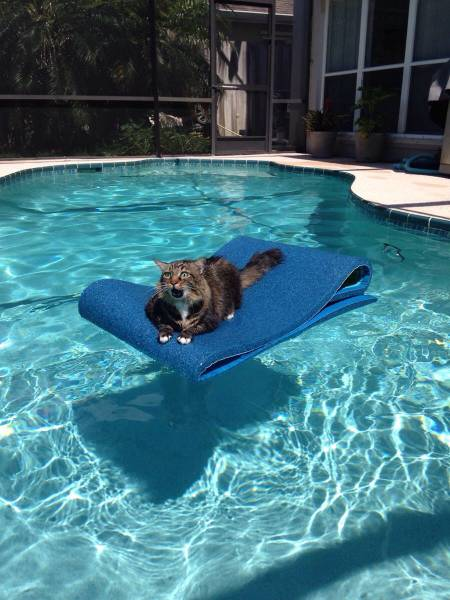 cat floating in pool freaking out
