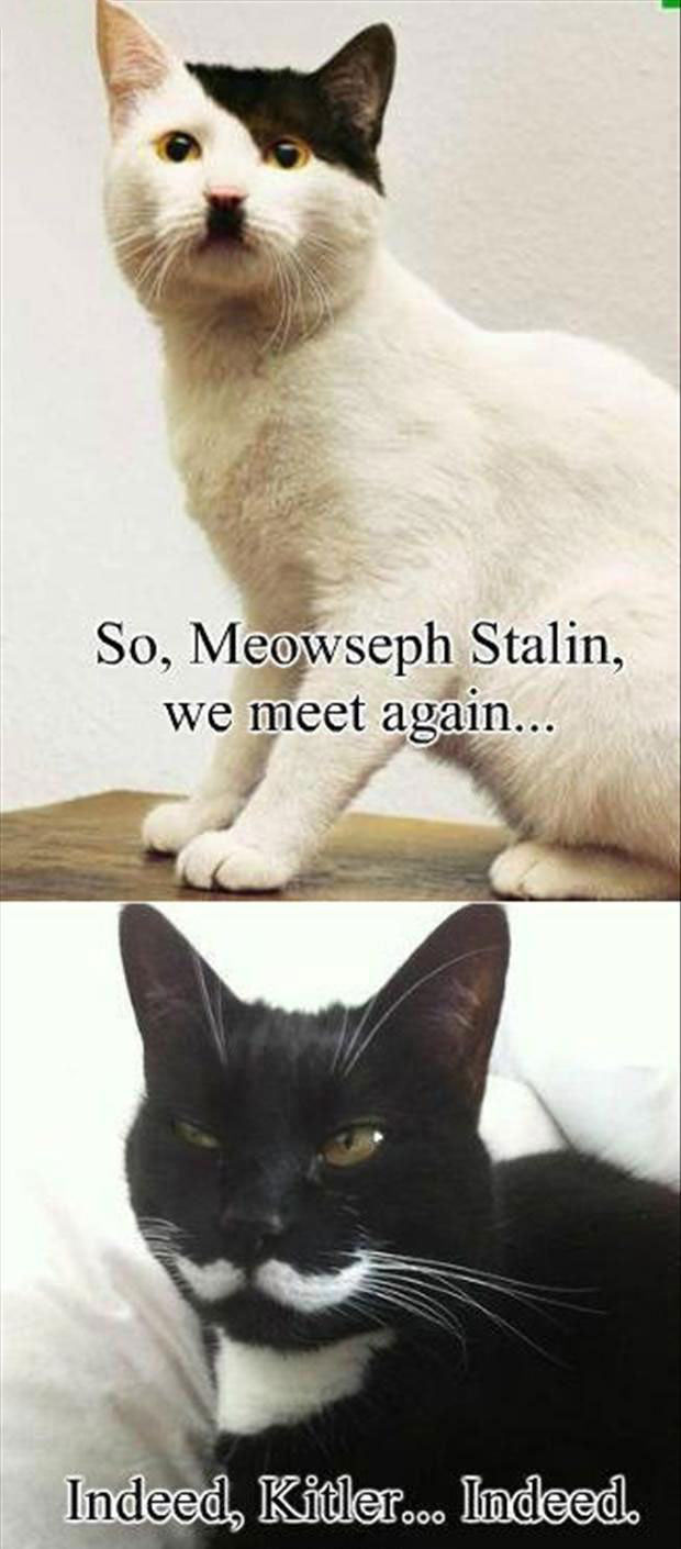 so meowseph stalin we meet again, indeed kitler indeed, meme