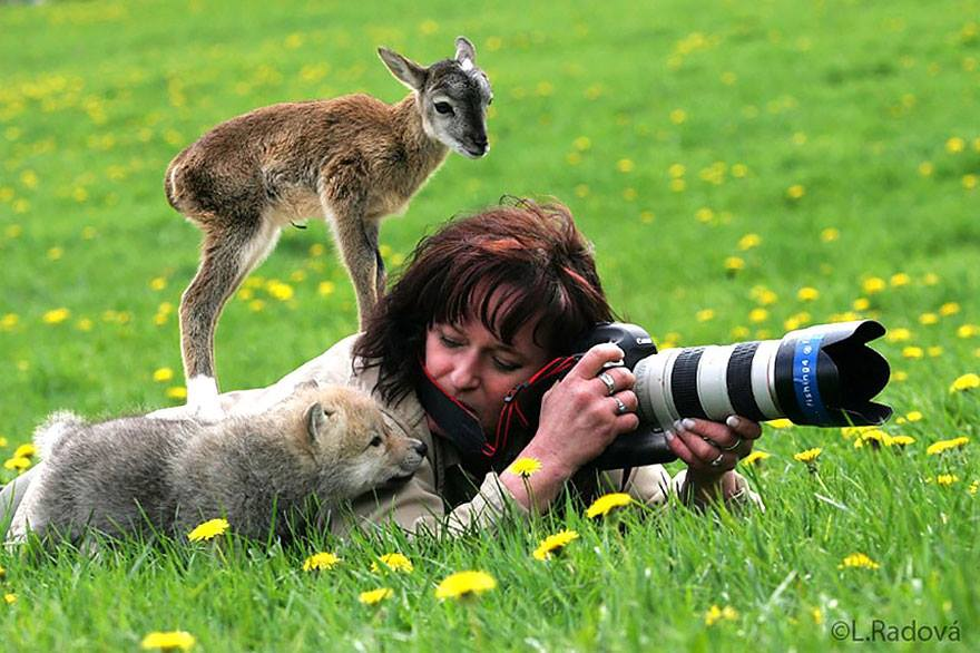 photographs of animal photographers and the animals they are trying to photograph