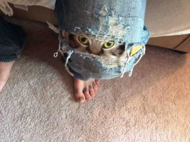 when you have some feline in your jeans