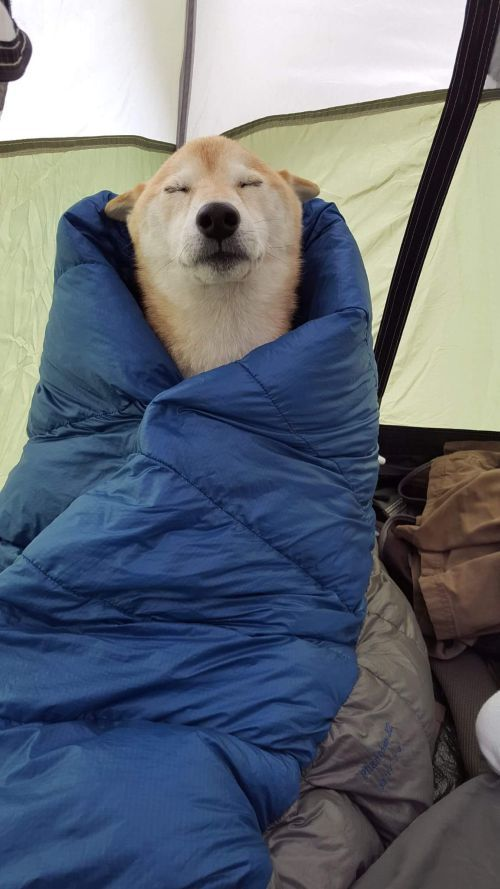 dog is really comfortable wrapped in a sleeping bag