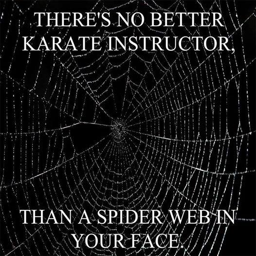 there's no better karate instructor than a spider web in your face