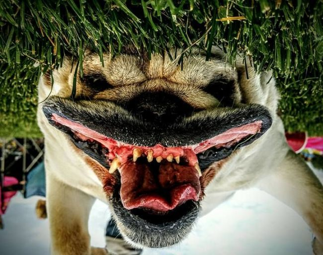upside down dog selfie will give you nightmares