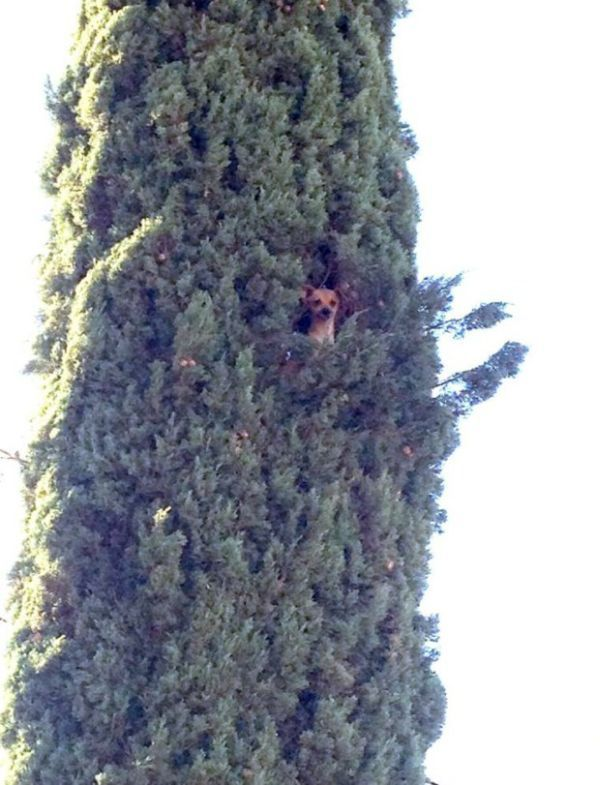 just a dog in a tree, wtf
