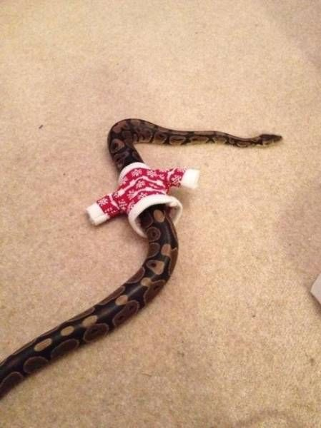my snake was cold so i knitted him a sweater
