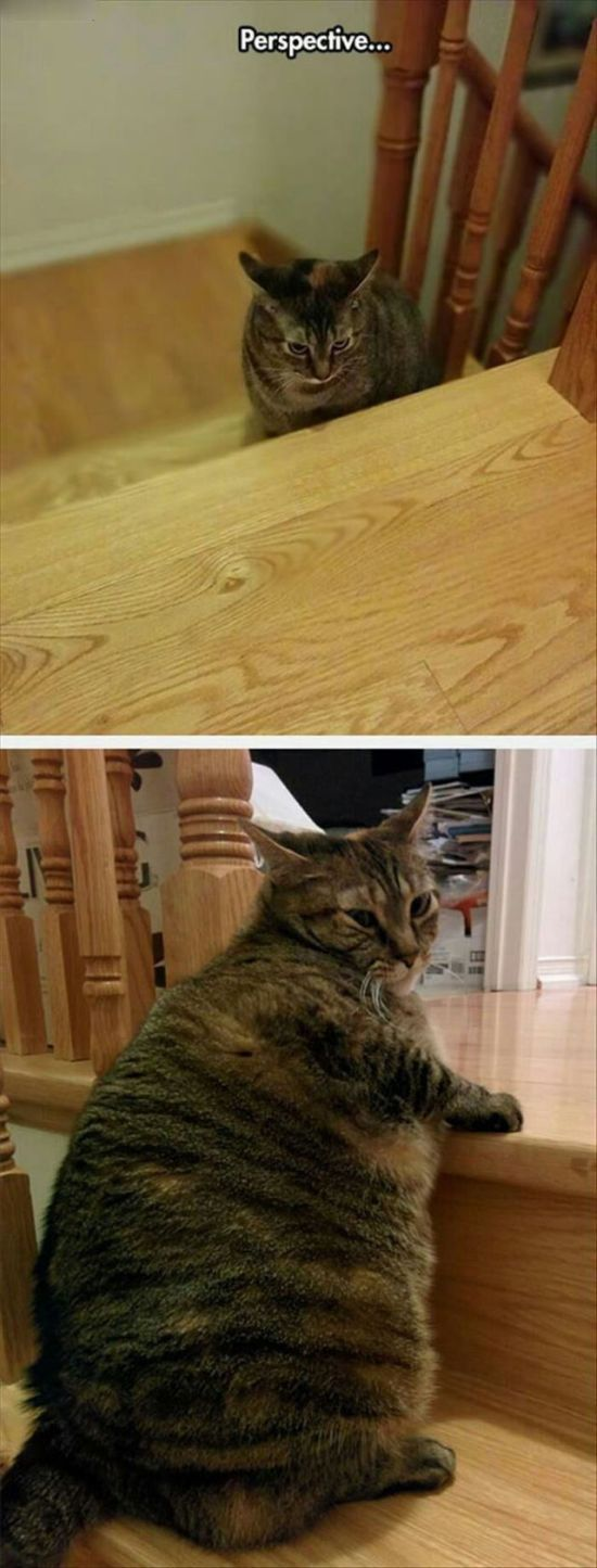 perspective is everything, fat cat on stairs