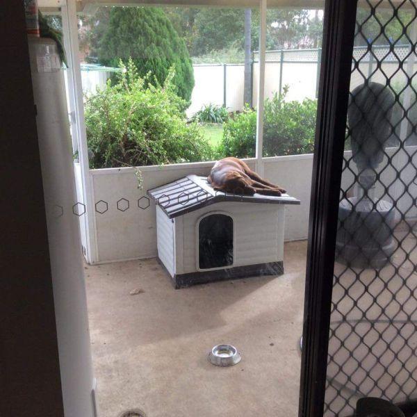 dog sleeping on top of dog house