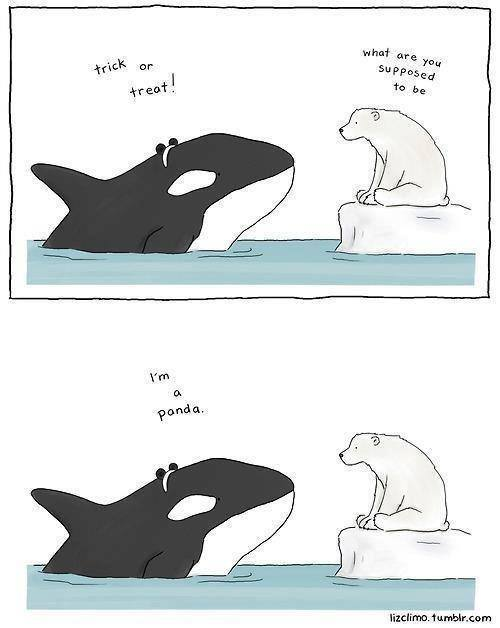 trick or treat, what are you supposed to be?, a panda, killer shark and polar bear on halloween