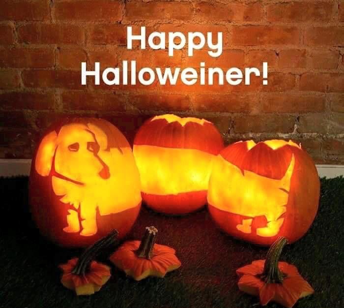 happy halloweiner, winer dog pumpkin carving