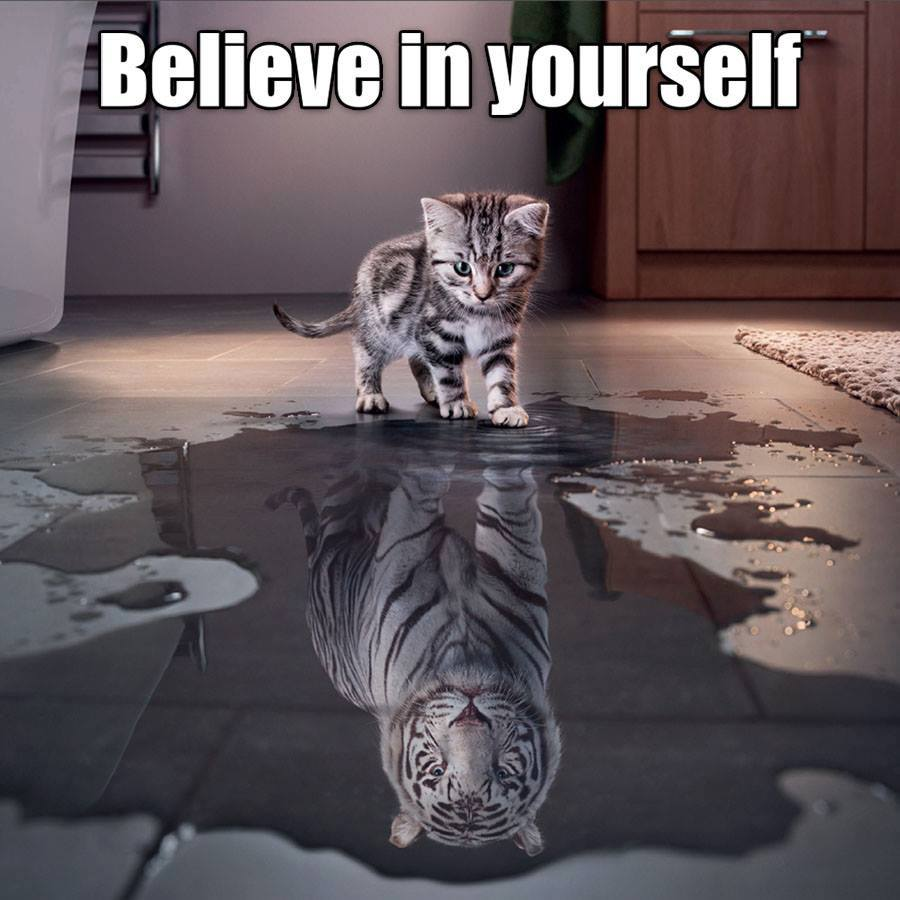 believe in yourself, kitten seeing a tiger in a puddle
