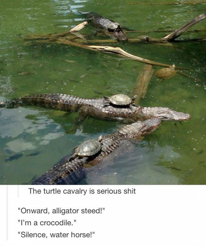 the turtle cavalry is serious shit, onward alligator steed, i'm a crocodile, science water horse