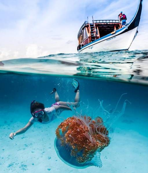 beautiful half underwater shot of a boat a person and a sea creature