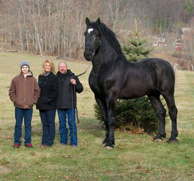 ridiculously large horse with people to scale