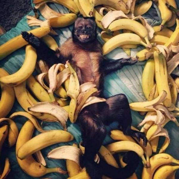 a really happy monkey surrounded by bananas
