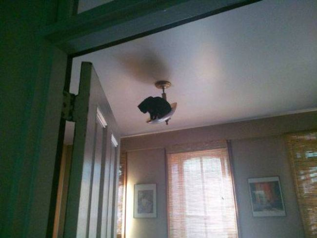 cat chilling in the light fixture, wtf