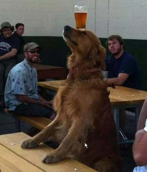 dog balancing beer on head in the cafeteria