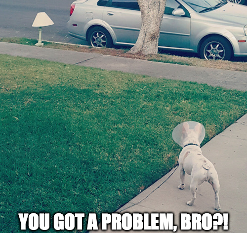 you got a problem bro? cone dog made at mocking lamp