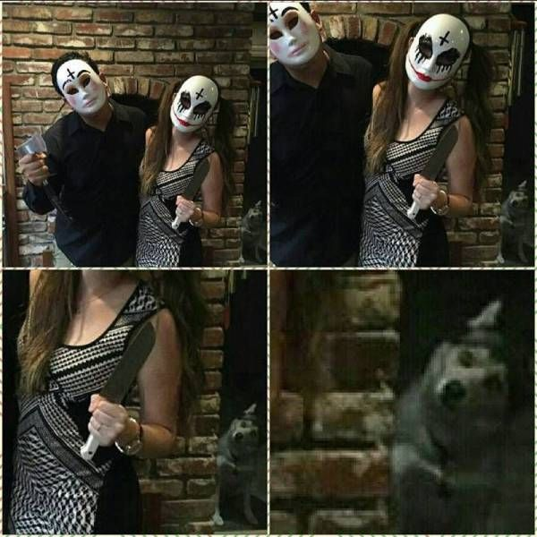 couple poses with creepy masks, dog is creeped out