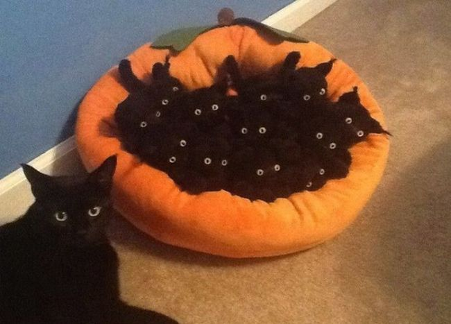 a proud cat shape set of eyes and her litter of cat shaped sets of eyes