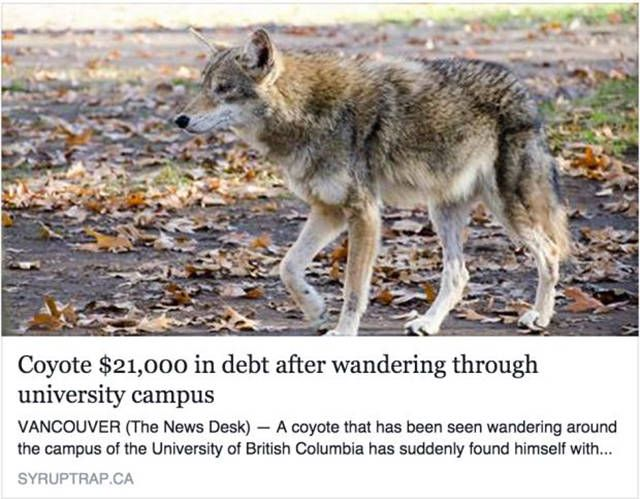 coyote $21000 in debt after wandering through university campus