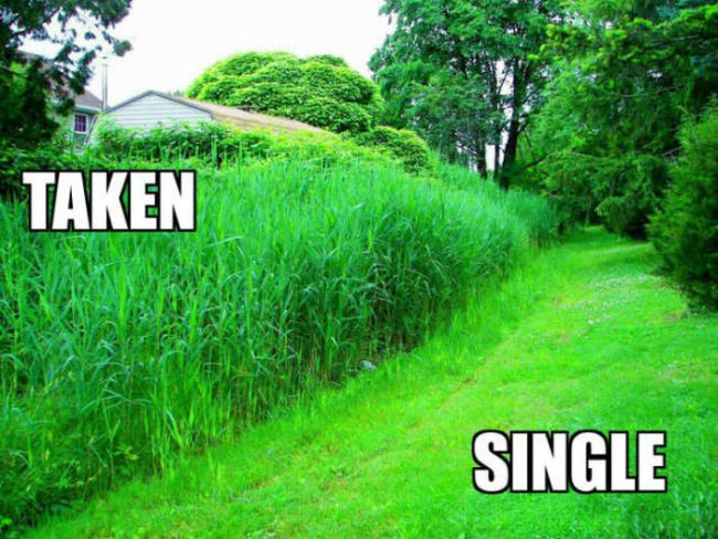 "your ""lawn"" when you are taken and when you are single"