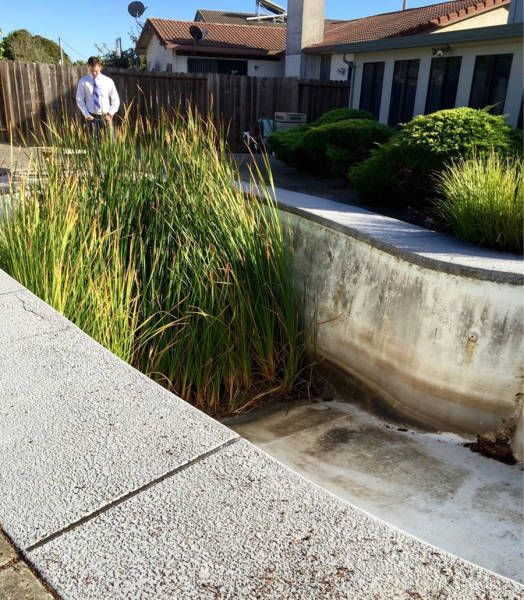really tall grass grown in empty pool