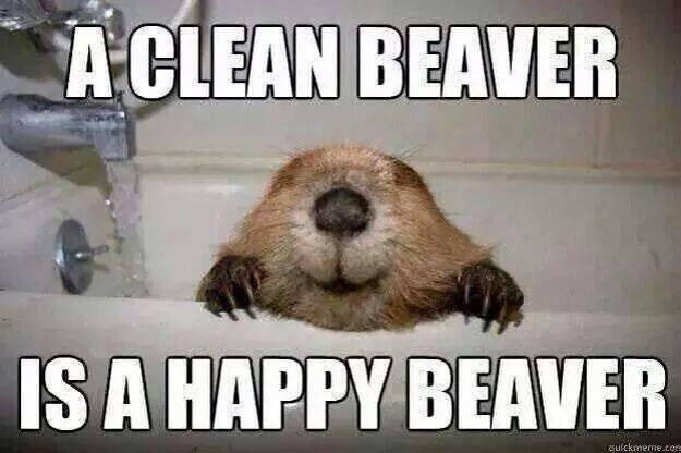 a clean beaver is a happy beaver, meme