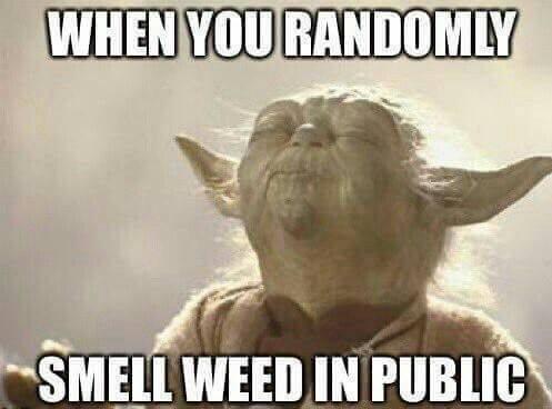 when you randomly smell weed in public, yoda, meme