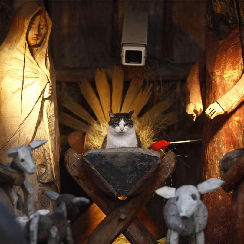 cat thinks he's the second coming of christ