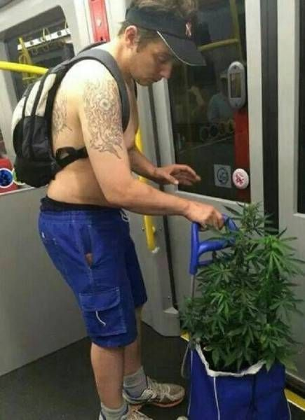 guy on subway taking he's marijuana plants for a walk, wtf