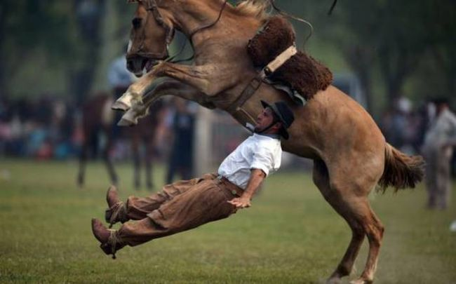 perfectly timed photo of an equestrian falling off his horse