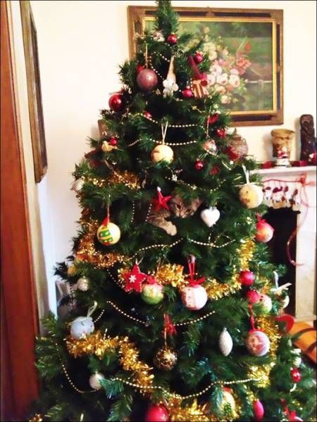 beautiful christmas tree with cat ornament, when you see it