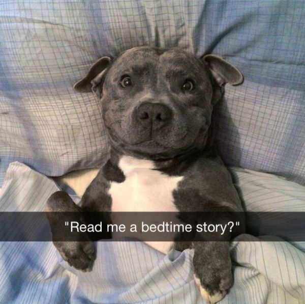read me a bedtime story?, happy dog tucked into bed, meme