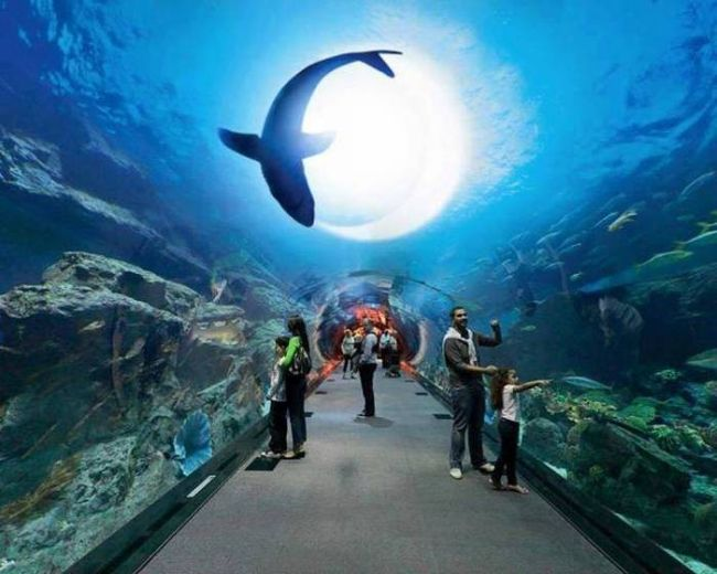 tunnel in acquario with fish swimming in front of the light, beautiful
