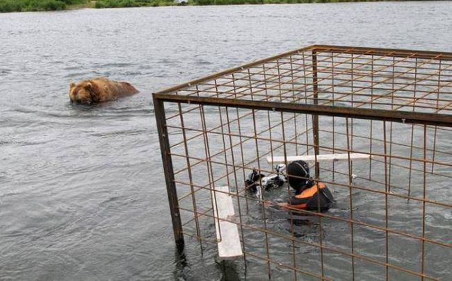 watching the bears in a bear cage, wtf