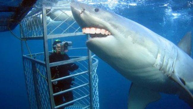 shark with human teeth, photoshop