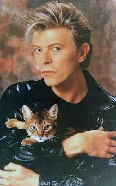 david bowie holding a cat, rip david bowie dead at 69 years old