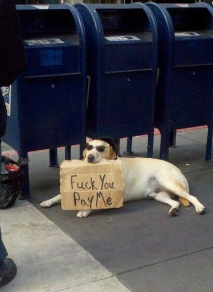 dog with sunglasses holding sign that says, fuck you pay me