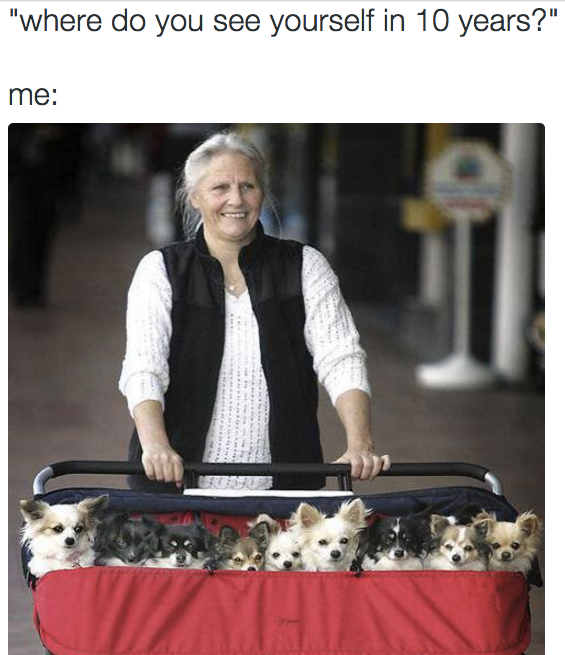 where do you see yourself in ten years, me, stroller full of dogs