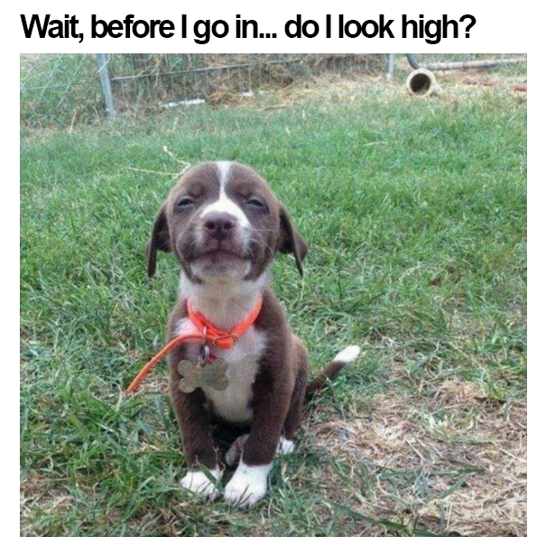 wait before i go in, do i look high, dog that looks high