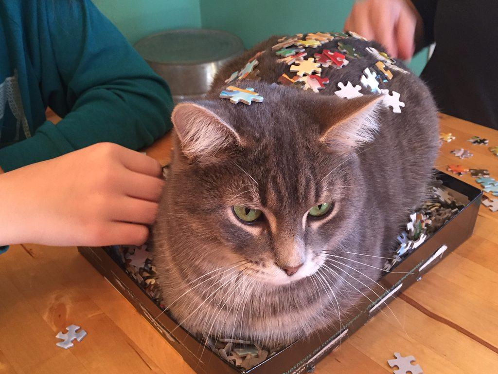 3d puzzles are so life like, cat sitting in a puzzle box