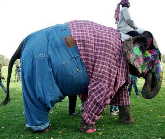 elephant wearing plaid shirt and jeans, wtf