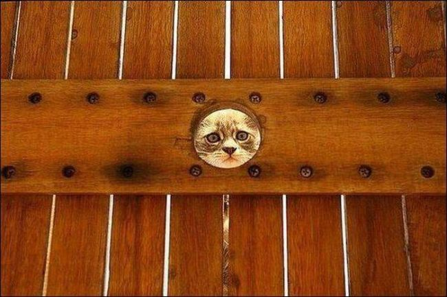 sad cat looking through hole in fence