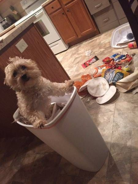when someone calls your dog white trash and he takes things literally