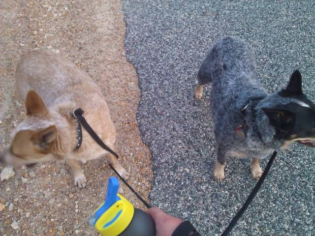 when your dogs know their place, dogs matching the pavement they are on