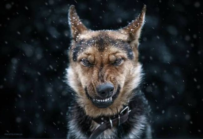 angry looking dog