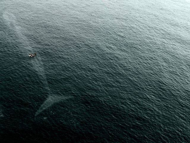 whale under small boat seen from the sky